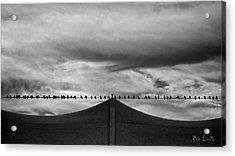 Birds Acrylic Print by Bob Orsillo