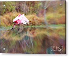 Birds Eye View Acrylic Print by Carol Groenen