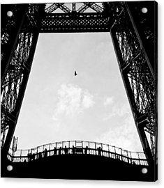 Birds-eye View Acrylic Print by Dave Bowman