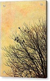 Birds Acrylic Print by Gynt