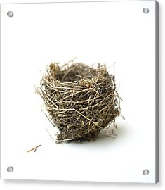 Bird's Nest Acrylic Print by Bernard Jaubert