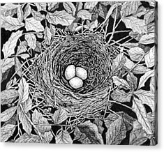 Bird's Nest Acrylic Print by Janet King