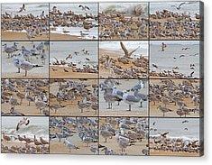 Birds Of Many Feathers Acrylic Print by Betsy Knapp