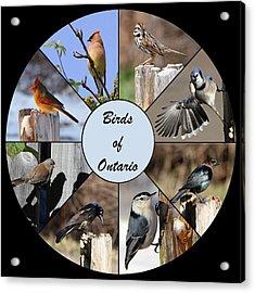 Birds Of Ontario Acrylic Print by Davandra Cribbie