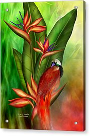 Birds Of Paradise Acrylic Print by Carol Cavalaris