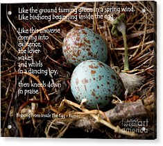 Birdsong From Inside The Egg Acrylic Print by Lainie Wrightson