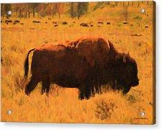 Bison Acrylic Print by Jo-Anne Gazo-McKim