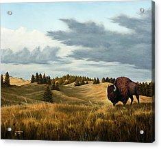 Bison  Wind Cave Park  South Dakota Acrylic Print by Rick Bainbridge