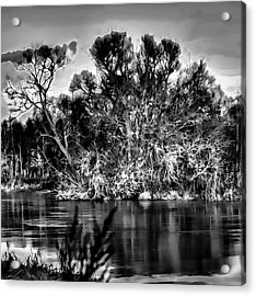 Black And White Artistic Big Tree Colored Coloured #orange By Sun On January 2 2015 Besides The Cree Acrylic Print by Leif Sohlman