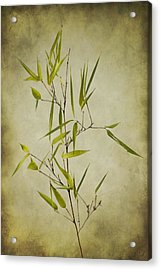 Black Bamboo Stem. Acrylic Print by Clare Bambers