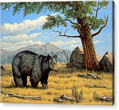 Black Bear Above Lamar Acrylic Print by Paul Krapf