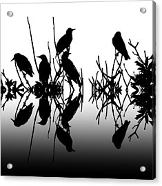 Black Birds Acrylic Print by Sharon Lisa Clarke