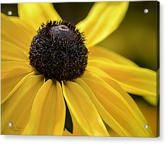 Black Eyed Susan Acrylic Print by Julie Palencia