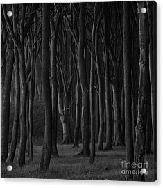 Black Forest Acrylic Print by Heiko Koehrer-Wagner