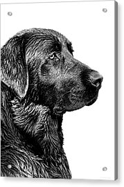 Black Labrador Retriever Dog Monochrome Acrylic Print by Jennie Marie Schell