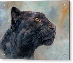 Black Panther Acrylic Print by David Stribbling
