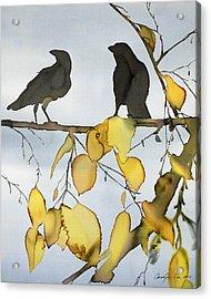 Black Ravens In Birch Acrylic Print by Carolyn Doe