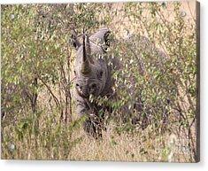 Black Rhino  Acrylic Print by Chris Scroggins