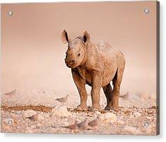 Black Rhinoceros Baby Acrylic Print by Johan Swanepoel