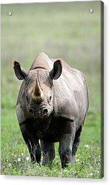 Black Rhinoceros Diceros Bicornis Acrylic Print by Panoramic Images
