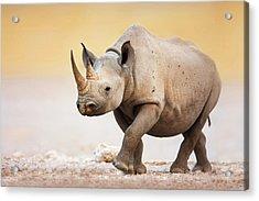 Black Rhinoceros Acrylic Print by Johan Swanepoel