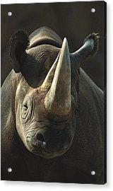 Black Rhinoceros Portrait Acrylic Print by San Diego Zoo