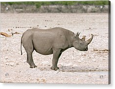 Black Rhinoceros Acrylic Print by Simon Booth
