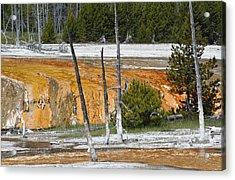 Black Sand Basin Therma Runoff Yellowstone Acrylic Print by Bruce Gourley