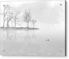 Black Swans Swimming In A Lake Acrylic Print by Bijan Studio