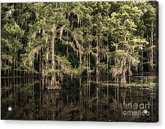 Black Water In Caddo Lake Acrylic Print by Tamyra Ayles