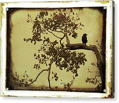Blackbird In A Tree Acrylic Print by Gothicolors Donna Snyder