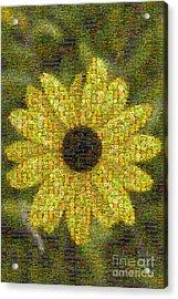 Blackeyed Suzy Mosaic Acrylic Print by Darleen Stry