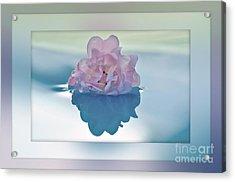 Blend Of Pastels Acrylic Print by Kaye Menner