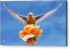 Bless  You Acrylic Print by Jean Noren
