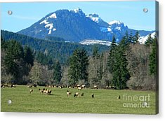 Blessed In The Valley Acrylic Print by Chalet Roome-Rigdon