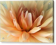 Blessed  Acrylic Print by  The Art Of Marilyn Ridoutt-Greene