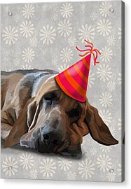 Blood Hound After The Party Acrylic Print by Kelly McLaughlan