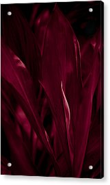 Blood Red Acrylic Print by Kevin Barske
