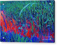 Bloody Battle Of New Orleans 1 Acrylic Print by Alys Caviness-Gober