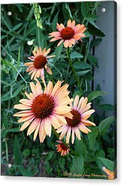 Blooming Coneheads Acrylic Print by Lingfai Leung