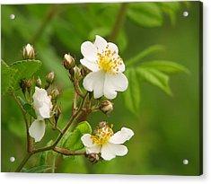 Blooming Acrylic Print by Lynn Berney