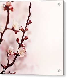 Blossom Acrylic Print by Jelena Jovanovic