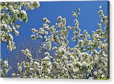 Blue And White Acrylic Print by Steven Stutz