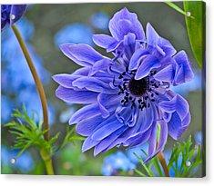 Blue Anemone Flower Blowing In The Wind Acrylic Print by Eva Kondzialkiewicz