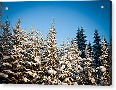 Blue Blue Sky Acrylic Print by Robert Hellstrom