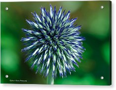 Blue Burst Acrylic Print by Sheen Watkins