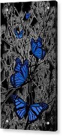 Blue Butterflies Acrylic Print by Barbara St Jean
