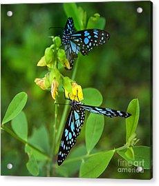 Blue Butterflies In The Green Garden Acrylic Print by Regina Koch