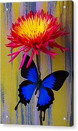 Blue Butterfly On Fire Mum Acrylic Print by Garry Gay