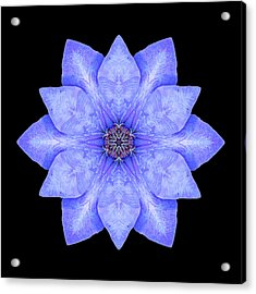 Blue Clematis Flower Mandala Acrylic Print by David J Bookbinder